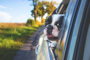 How to protect your car interior from dogs