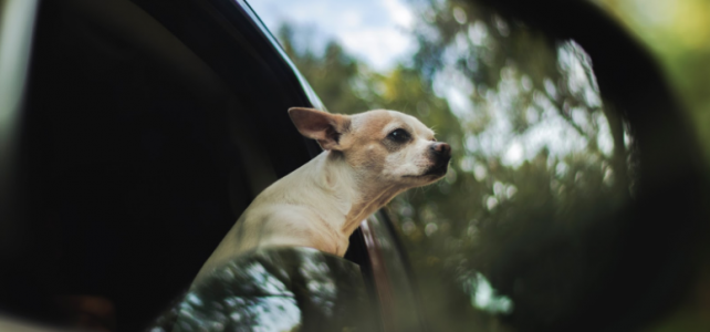 How to Clean and Dog Proof Your Car of Dog Hair